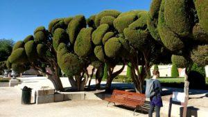 Parks haben Madrid, Wien und Paris viele zu bieten.