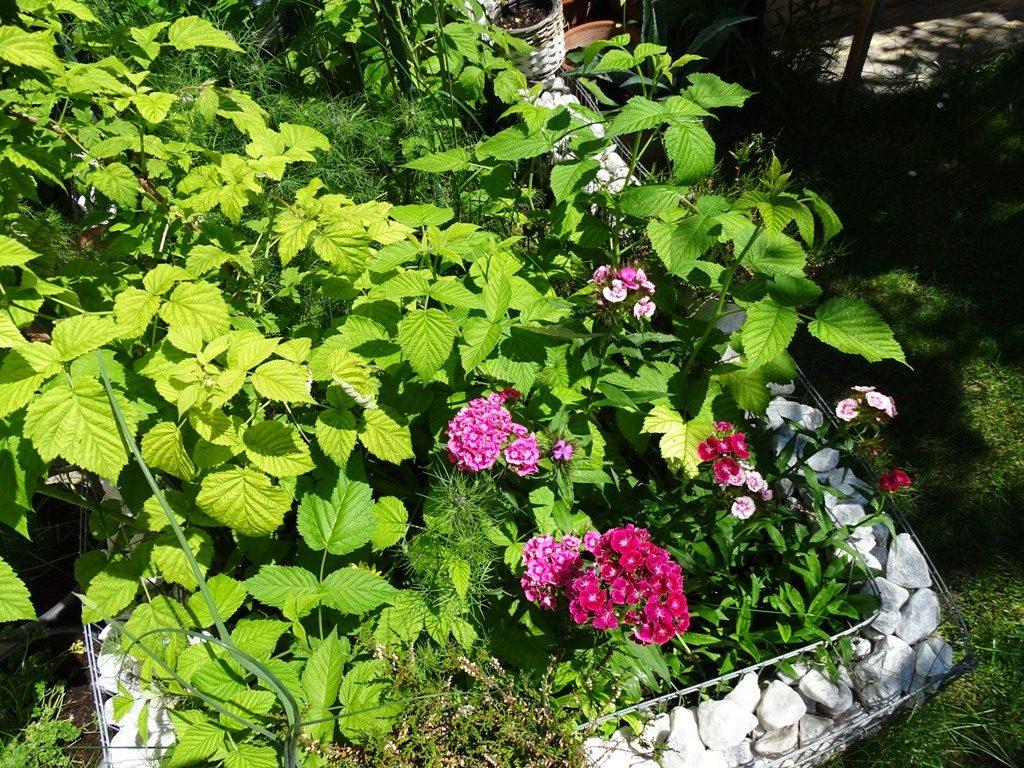 Kompakt und aufgeräumt: Gabione als Beetbegrenzung als DIY-Gartenidee umsetzen