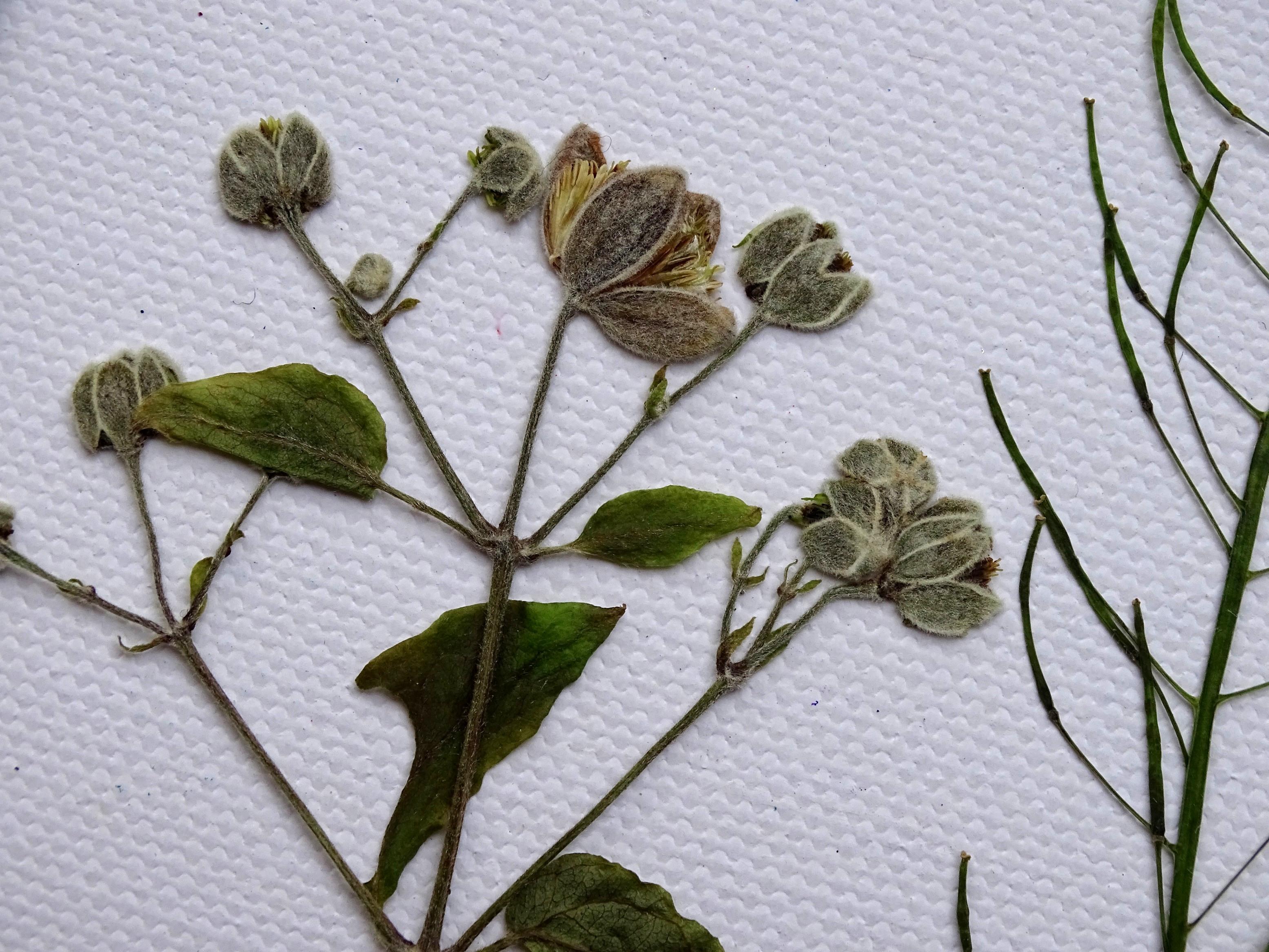 Gepresste Pflanzen können beim Basteln mit Epoxidharz verwendet werden.