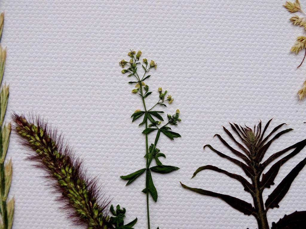 Gräser, Blumen und Blätter pressen: Basteln mit Naturmaterialien