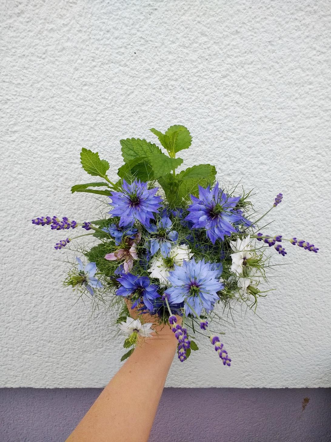 Blumenstrauß mit blauen Blumen: Jungfer im Grünen wächst im wilden Bauerngarten fröhlich und robust vor sich hin