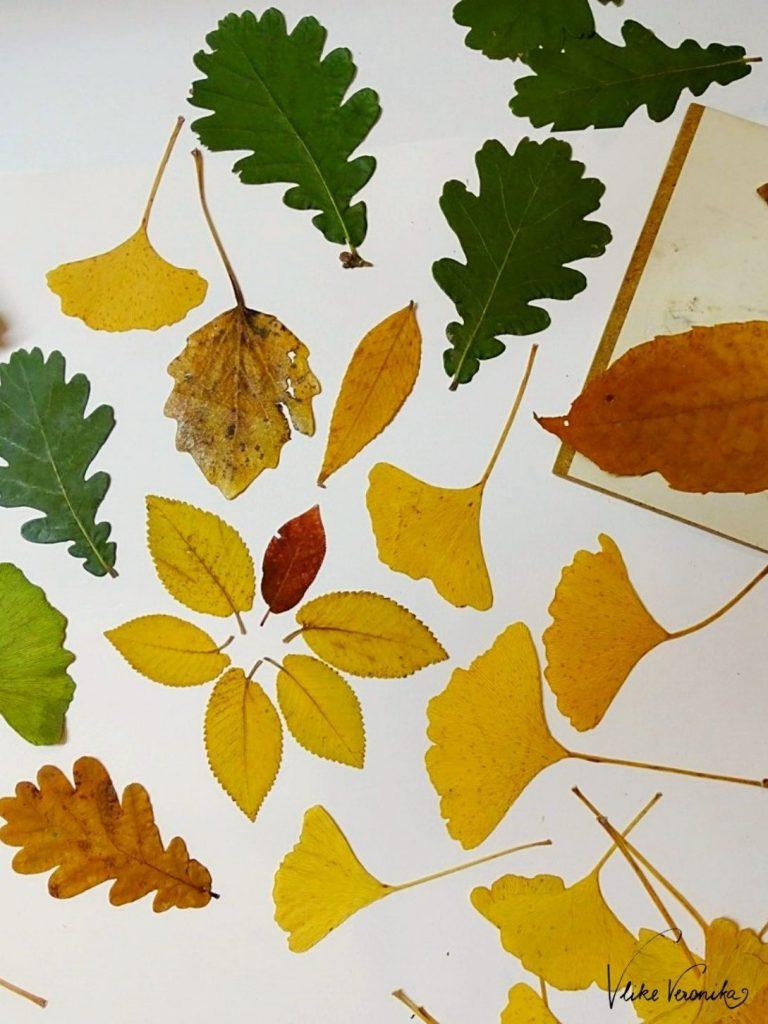 Buntes Herbstlaub frisch aus der Pflanzenpresse: Eiche, Ginkgo und mehr