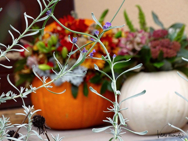 Die letzten Lavendelblüten zeigen sich im Oktober, wenn schon der Herbst den Sommer abgelöst hat.