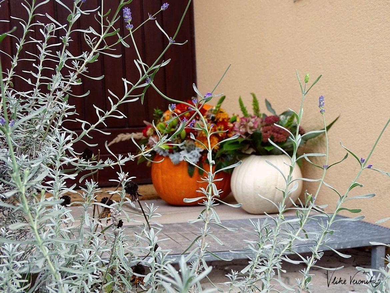 Lavendelblüten und Kürbis - so hübsch ist der Herbst