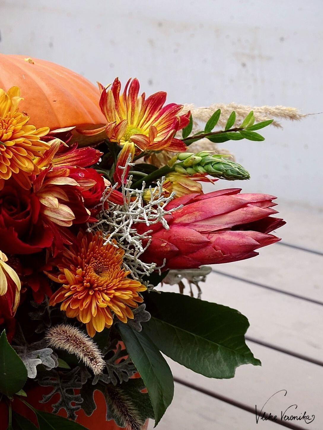 Der Herbst in Bildern: Kürbis und Rot-Orange Blumen gehören dazui.
