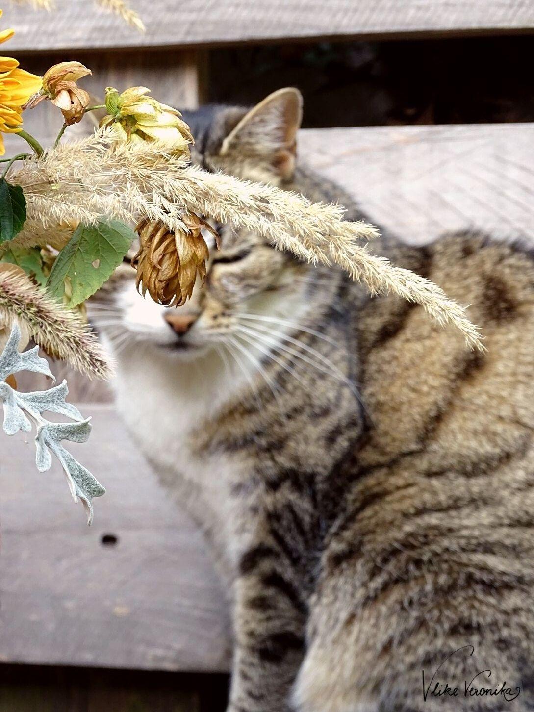 Dekoriere Deinen Kürbis zu Halloween mit Blumen und Gräsern.