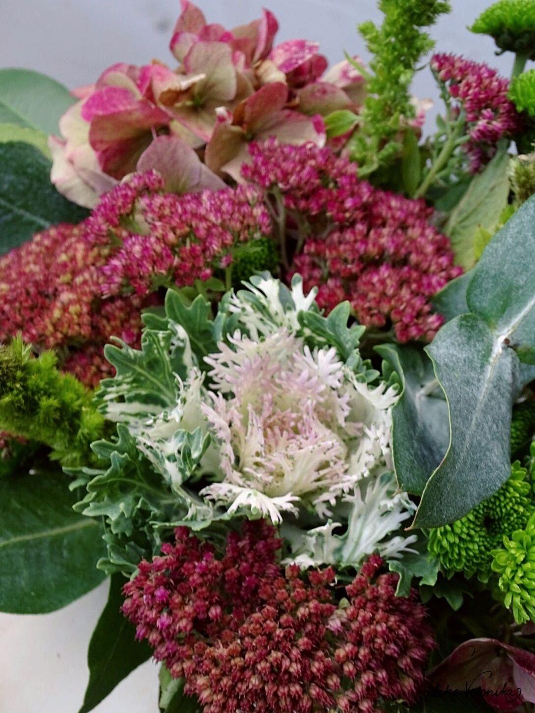 Hortensien, Fetthenne und Zierkohl