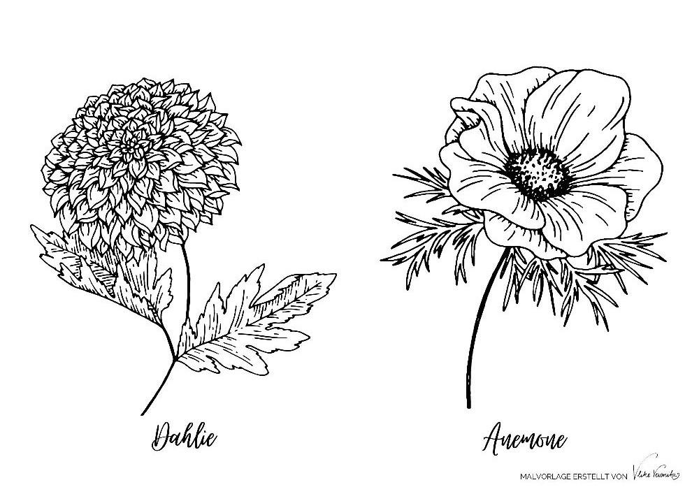 Malvorlagen für Kinder und Erwachsene: Dahlie und Anemone