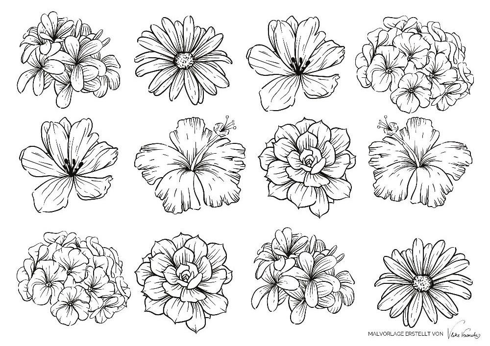 Ausmalbild für den Sommer mit Blumen wie Hibiskus, Flieder, Hortensien, Cosmea, Margeriten und mehr.